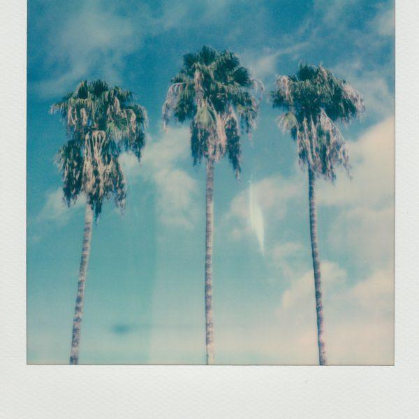 thumbnails/palm-trees-3534975.jpg